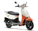 Cute Design Best Quality 50cc Adult Scooter